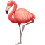 Flamingo Whatsapp U+1F9A9