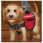 Assistenz Hund Emoji U+1F415 U+200D U+1F9BA